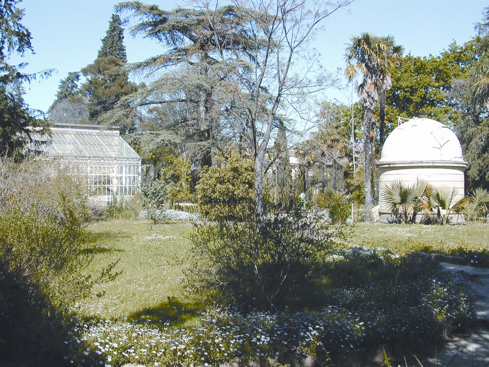 jardin des plantes de montpellier. Black Bedroom Furniture Sets. Home Design Ideas