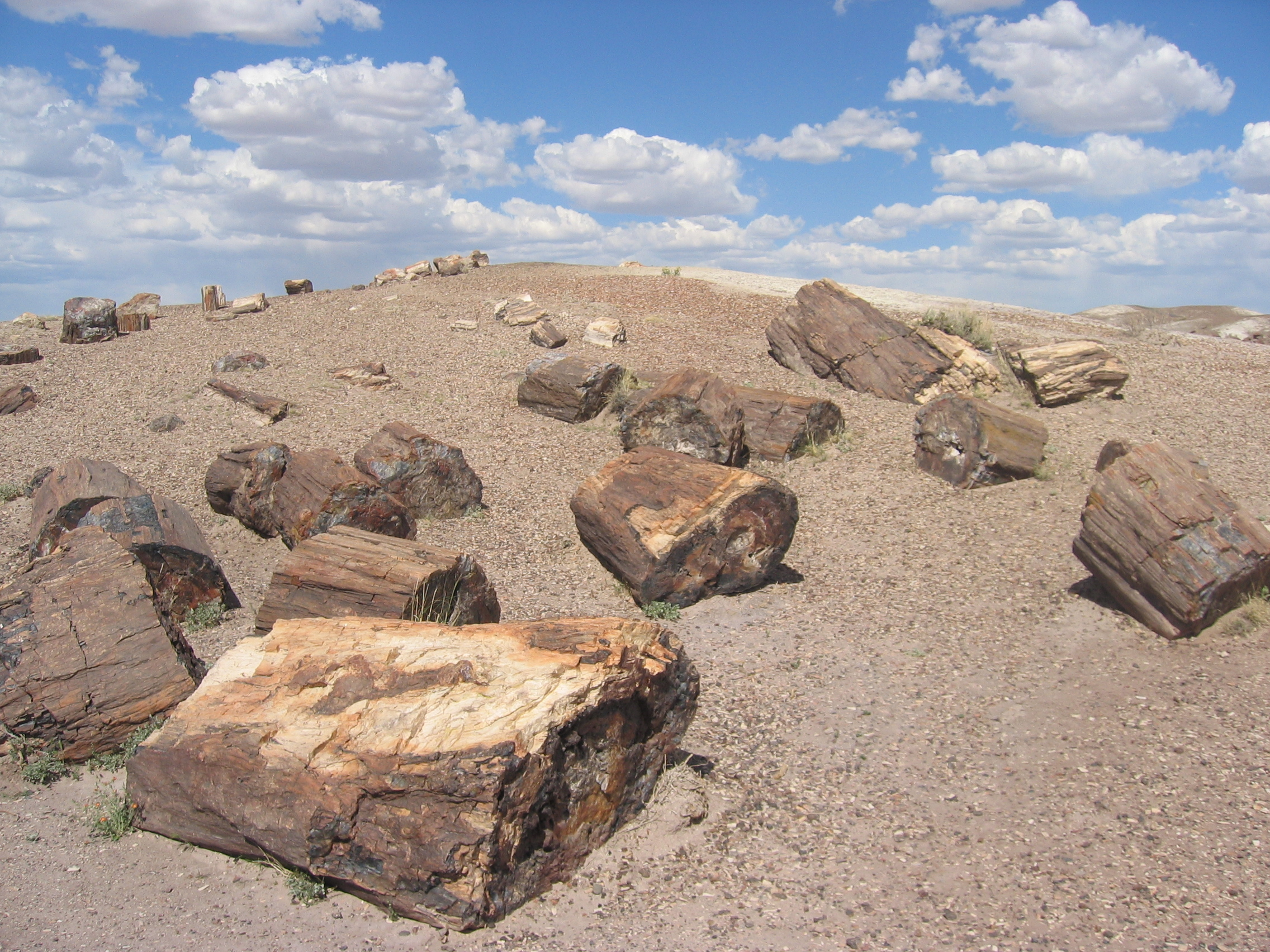 hispanic singles in petrified forest natl pk Petrified forest natl pk, az 86028 boundary map, number of addresses served, population & income data, peer rankings.